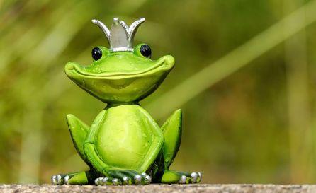 frog-2240764__480